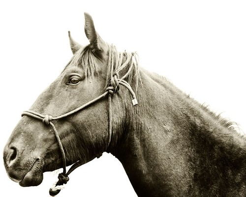 Horse and Halter photo