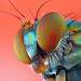 long-legged fly by nanomet's
