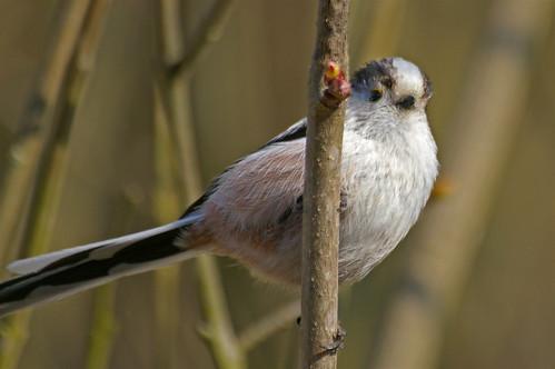 Oiseaux du jardin.