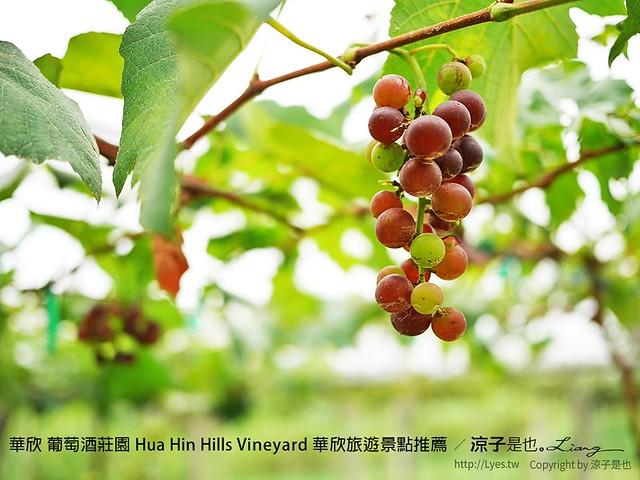 華欣 葡萄酒莊園 Hua Hin Hills Vineyard 華欣旅遊景點推薦 8