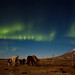 Northern lights and horses