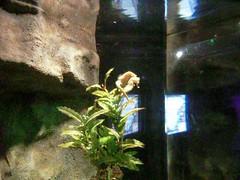 2011.02 SERRIS - Aquarium Sea Life