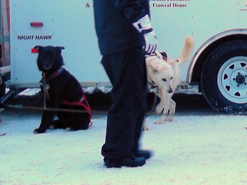 5504113968 eeb1716cbe Iditarod 2011