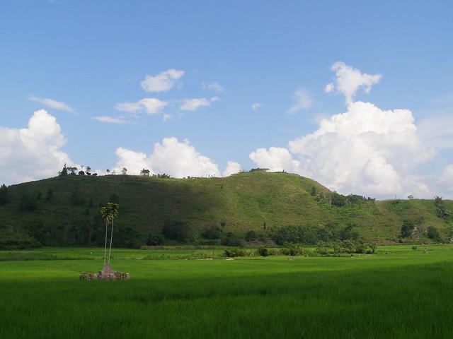 稻田与绿山