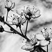 Vintage Spring by hcathefifth
