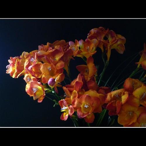 "Фотография: ""bouquet de freesias "" Автор: peltier patrick"