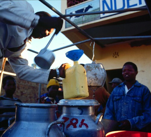 Collecting milk in Kenya's informal market