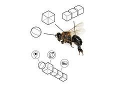 honey bee gs3