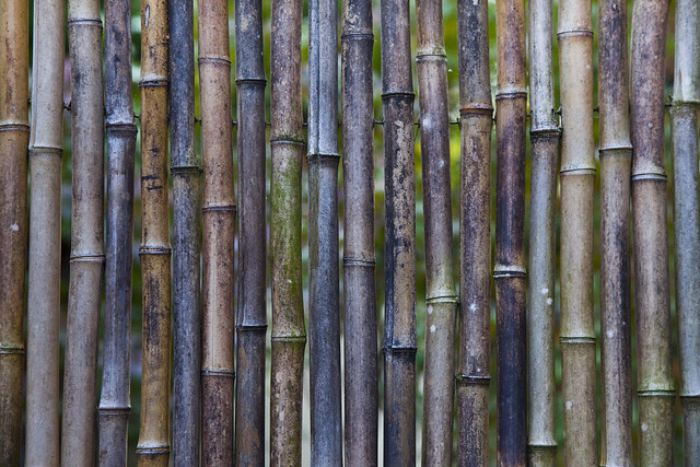Bamboo Fence in Seattle Japanese Garden Flickr Photo
