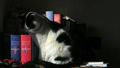 Literate cat