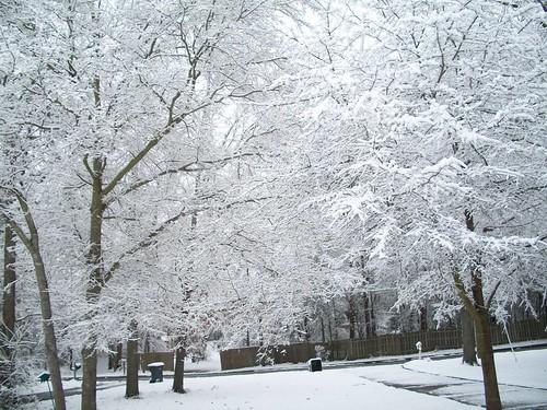 trees winter snow georgia landscape hephzibah 32110