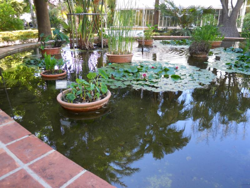 Jardineros en acci n plantaci n de un jard n acu tico for Jardin acuatico