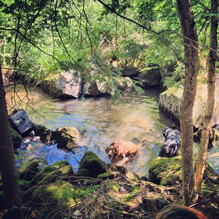 Maggie and Indiana in the creek.