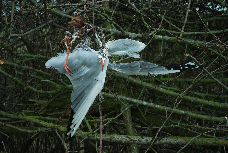 DSC_5887-dead-bird-canal