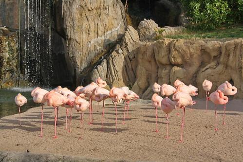 Вмосковском зоопарке появились насвет 5 птенцов фламинго