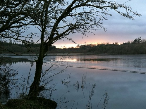 ireland sunset sky lake tree water landscape cavan iphone
