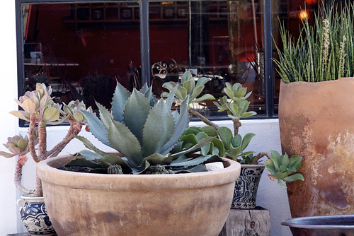 pretty potted succulents