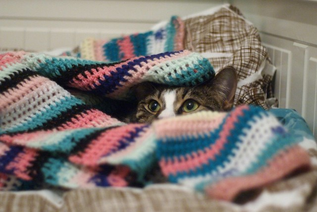 cat has snuggle-den