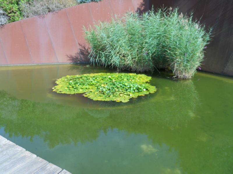 Jardineros en acci n dise ar un jard n acu tico for Jardines acuaticos