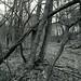 Öfter Wald #14