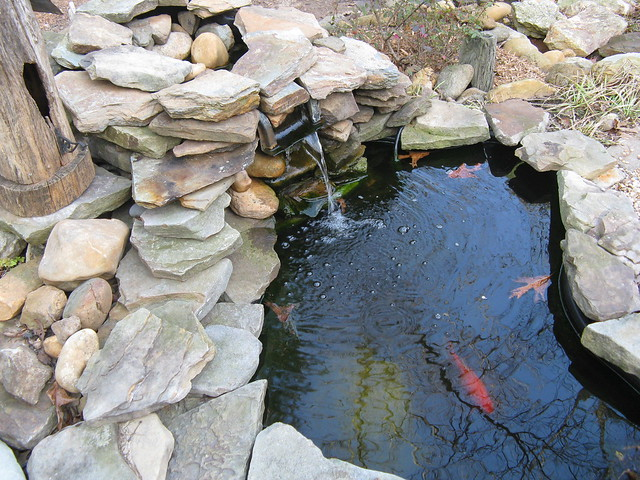 Koi gold fish flickr photo sharing for Koi fish pond lowes