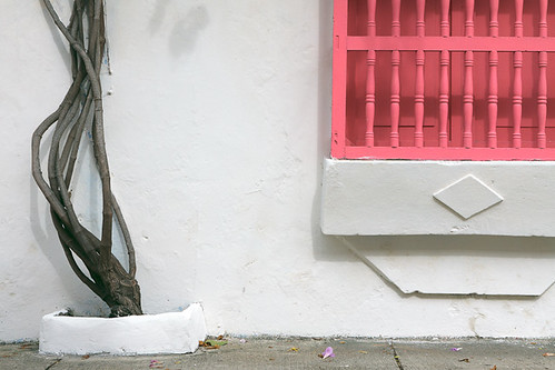 pink tree window wall colombia closed paint balcony branches bolivar pot vegetation blinds cartagena