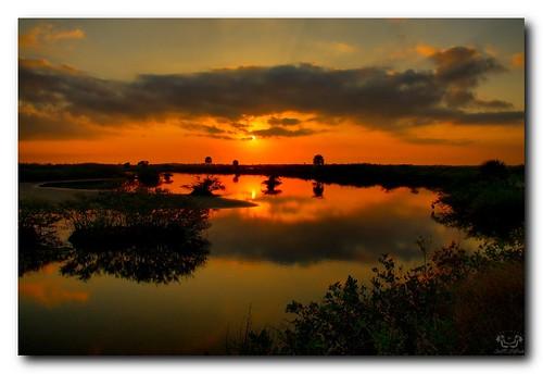 wild usa sun beautiful sunrise geotagged unitedstates florida titusville merrittislandnwr scotthelfrichphotographycom geo:lat=2886512110 geo:lon=8078659058