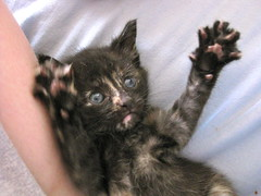 Kitten, Paws Up