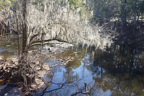 florida olenostatepark santaferiver highsprings gainesvillecyclingclub
