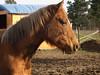 Pferdehals by caselmann24