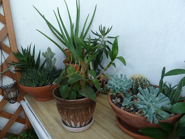 Balcony Gardening - 3.8.11