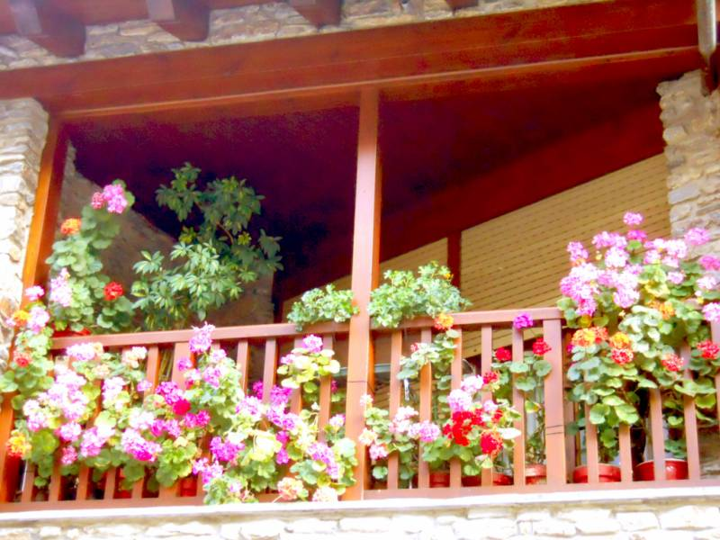 Jardineros en acci n decoraci n de balcones con plantas for Decoracion de terrazas con plantas