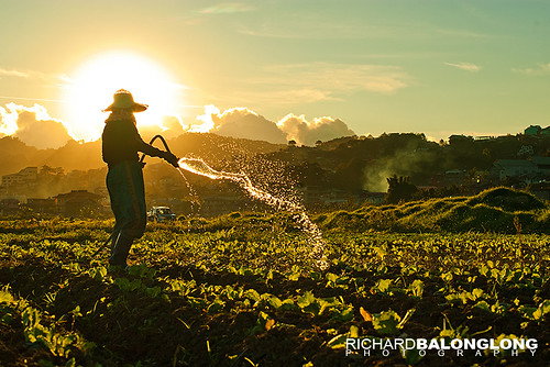 light sunset art water field garden 50mm la back strawberry scenery pentax f14 philippines scene lettuce richard trinidad gardener sprinkle benguet k110d balonglong