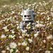 robot in spring by Johnson Cameraface