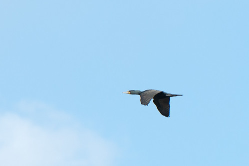 ...some bird...