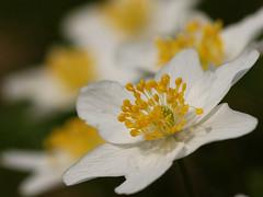 Close-up - Flora