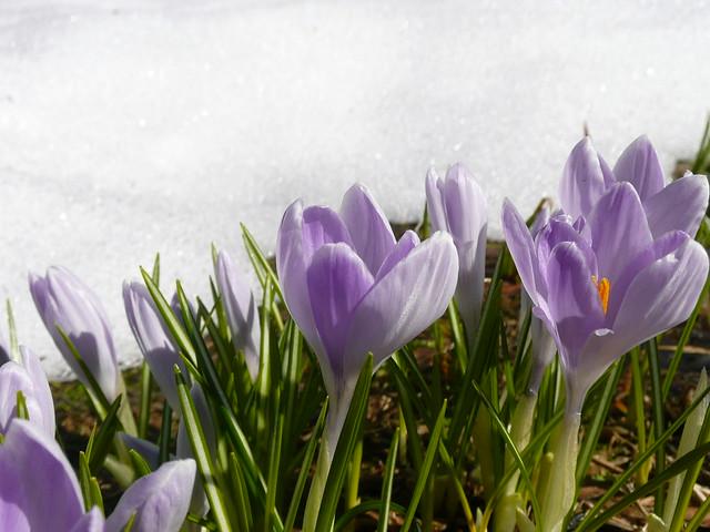 весна!!