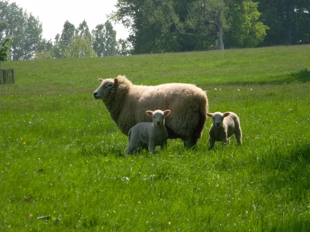 Lambies Overton Circular