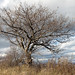 Small photo of Arbre en automne