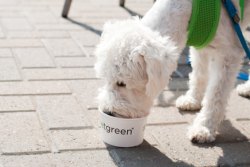 Dogs like Yogurt too?