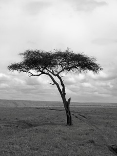MM lone Tree