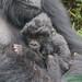 Gutangara Infant - Pablo Group named GWIRA by kwitizina