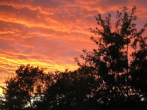 sunset summer sky cloud tree iowa cedarrapids project365