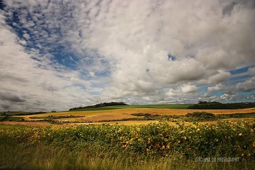 verde branco azul brasil clouds rural canon cores céu amarelo nuvens verdeeamarelo soja riograndedosul campos pampas agricultura plantação lavoura capão coresdobrasil ruralscene dircinha pampasgauchos