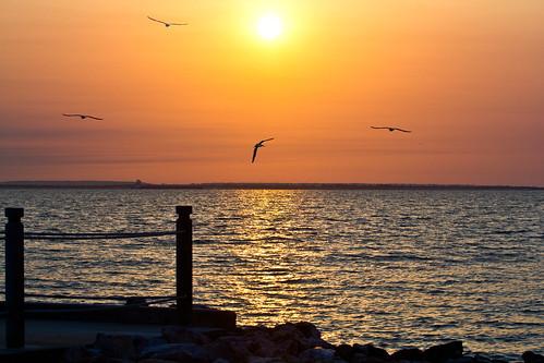 water sunrise canon texas seagull houston nasa seabrook laporte sylvanbeach nassaubay seabrooktexas nassaubaytexas flickraward nspp exposure3 canonrebelt2i bayareatexas canont2irebeleos