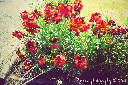Bunch of Wallflowers