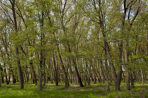 trees green forest woodland geotagged spring woods poplar forestry greece willow aspen canonef2470mmf28lusm gettyimages riparian nestos canoneos5d geo:lat=40987307966652175 geo:lon=24743398626983662 gettyimages:date_added=pre20110607