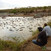 Admiring the Hippo Pool - Serengeti, Tanzania