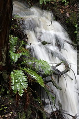 springtime waterfall & ferns