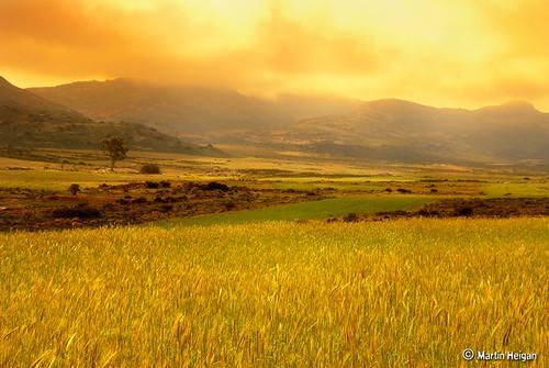 Garies Gold (Namaqualand)